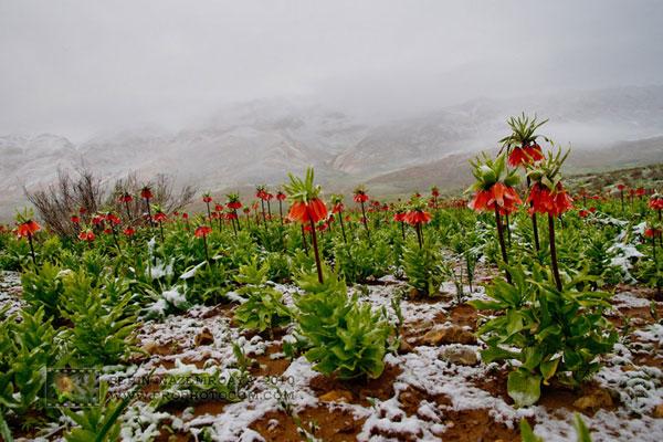 Iran Provinces Chaharmahal Bakhtiari Province اولدوز
